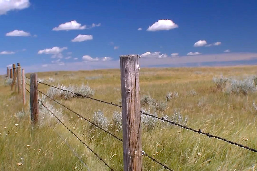 Fence line in southern Alberta