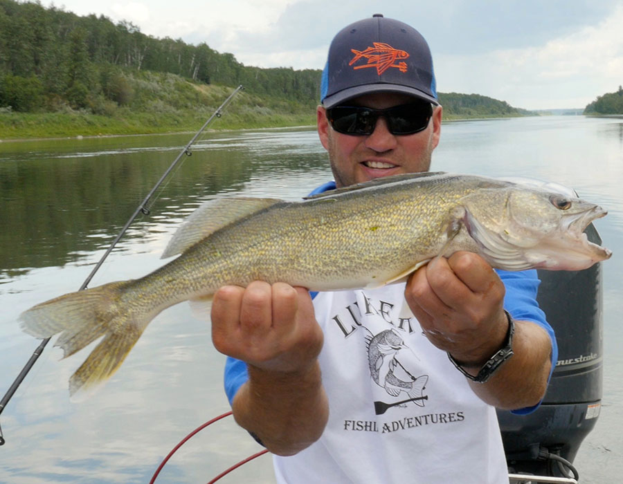 Walleye catch on the North Saskatchewan river