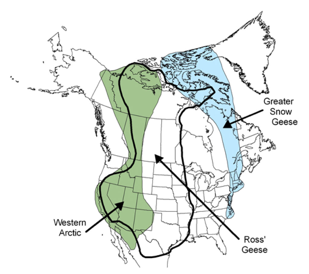 Map of North America - migratory areas of Western Arctic, Greater Snow Geese and Ross' Geese