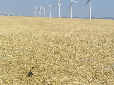Wind turbines located along migratory paths of bats are having an impact on population numbers