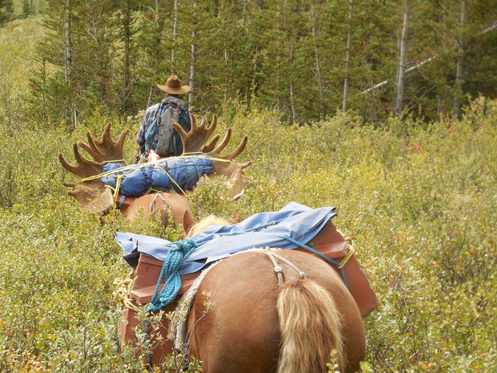 Alberta Outfitters still providing traditional hunts in a modern world
