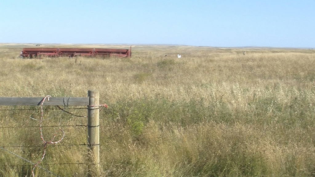 Making a difference for our Grasslands (audio)