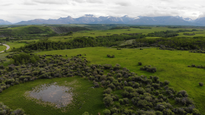 Ranchers along the eastern slopes are playing a significant role when it comes to enhancing habitat for wildlife while still maintaining a viable cattle operation.