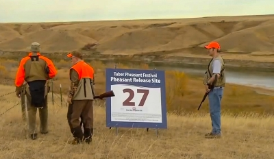 The Taber Pheasant festival and habitat restoration are the highlights for ACA in 2019