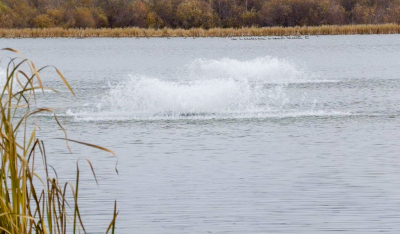 In order to ensure the survival of the fish put into Hasse Lake this past spring and fall an aeration system has been set-up to provide year round fishing opportunities.