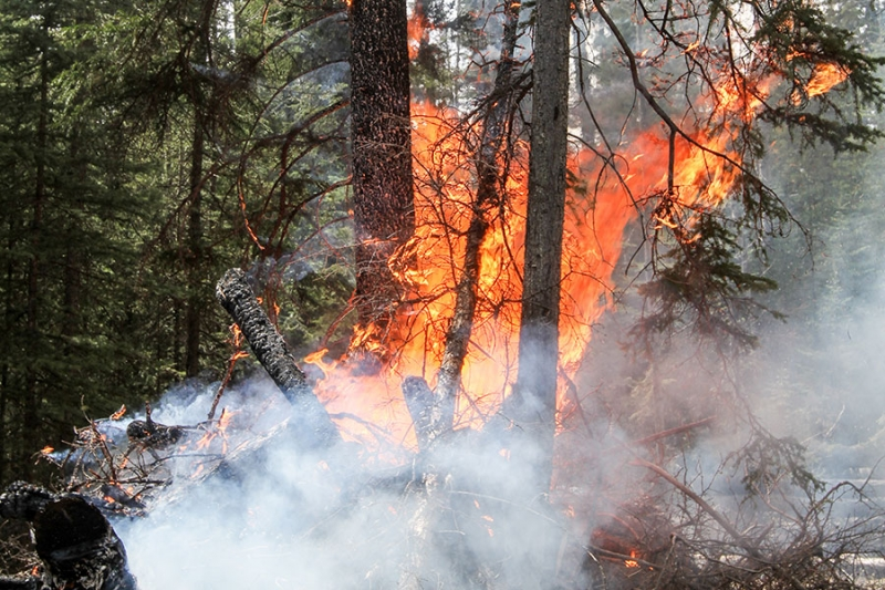 Last season, a total of 1,786 wildfires consumed more than 492,000 hectares of Alberta forest
