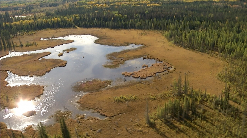 Alberta Wetlands - back from the brink