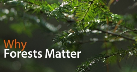 Why Forests Matter - a podcast interview with Brian Keating (audio)